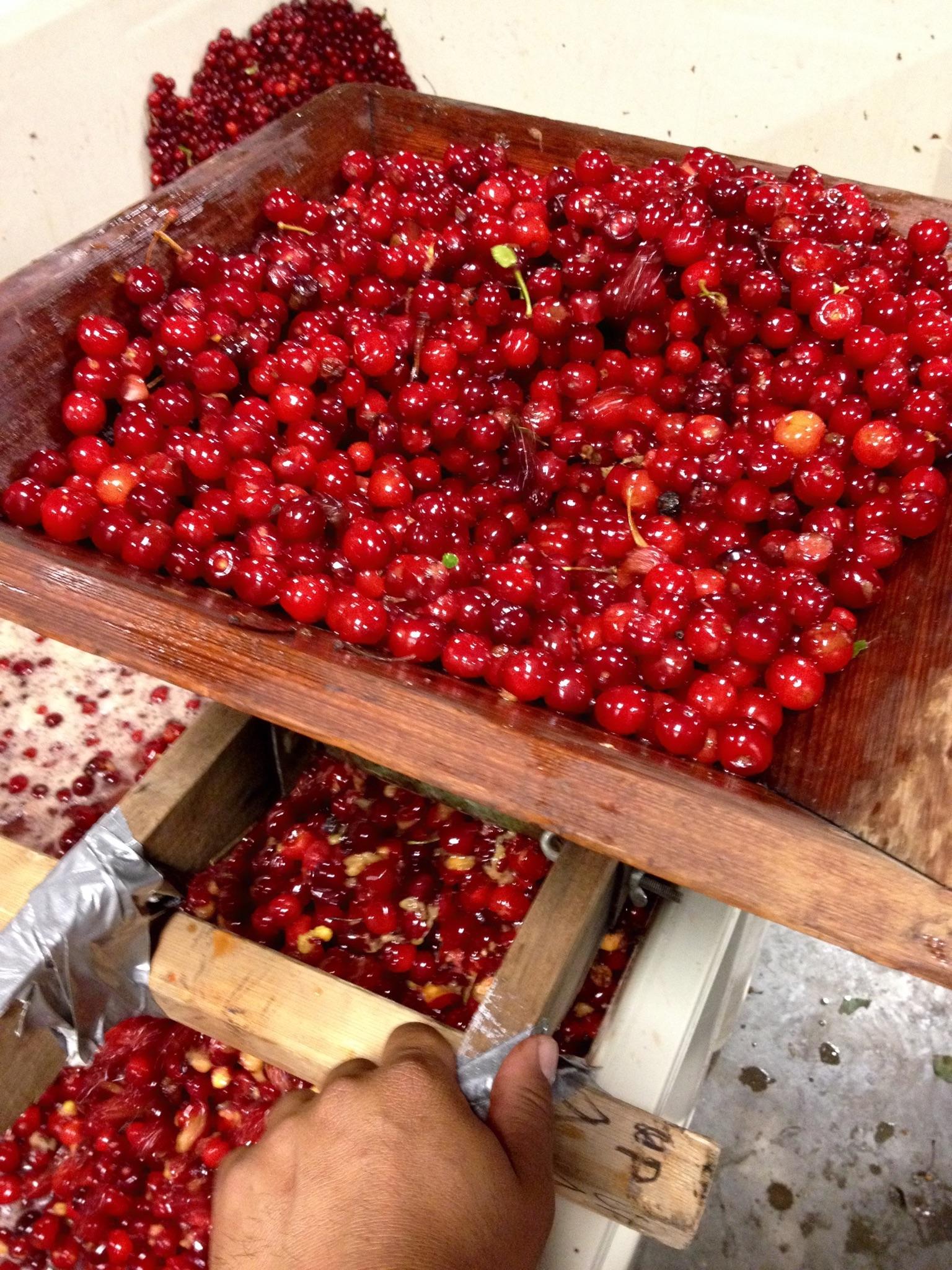 Crushing Cherries