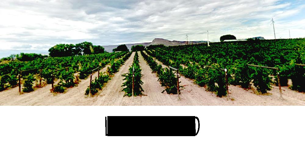 Image of Lovies Vineyard